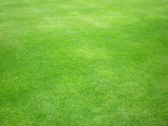 Free High Quality Grass Textures Collection Green Texture Repeating Background