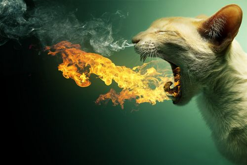 Flaming Cat - Now as DA print