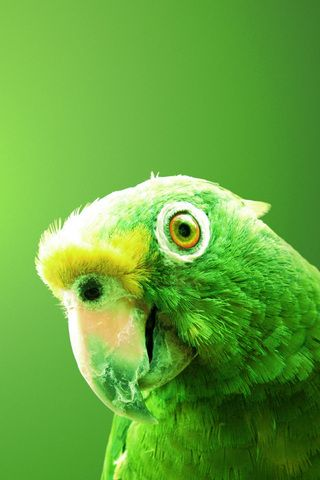 Green Parrot iPhone Wallpaper