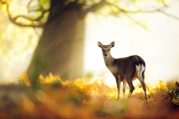 Deer-photography-2